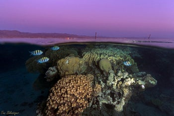 Fish swim near a coral reef in the Red Sea off the coast of Eilat, 2018.