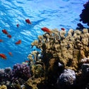 A coral reef in Eilat, photographed in 2019.