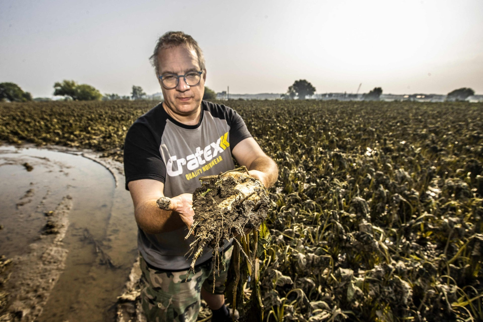 Meanwhile flooding in the Netherlands ruins a sugar beet crop