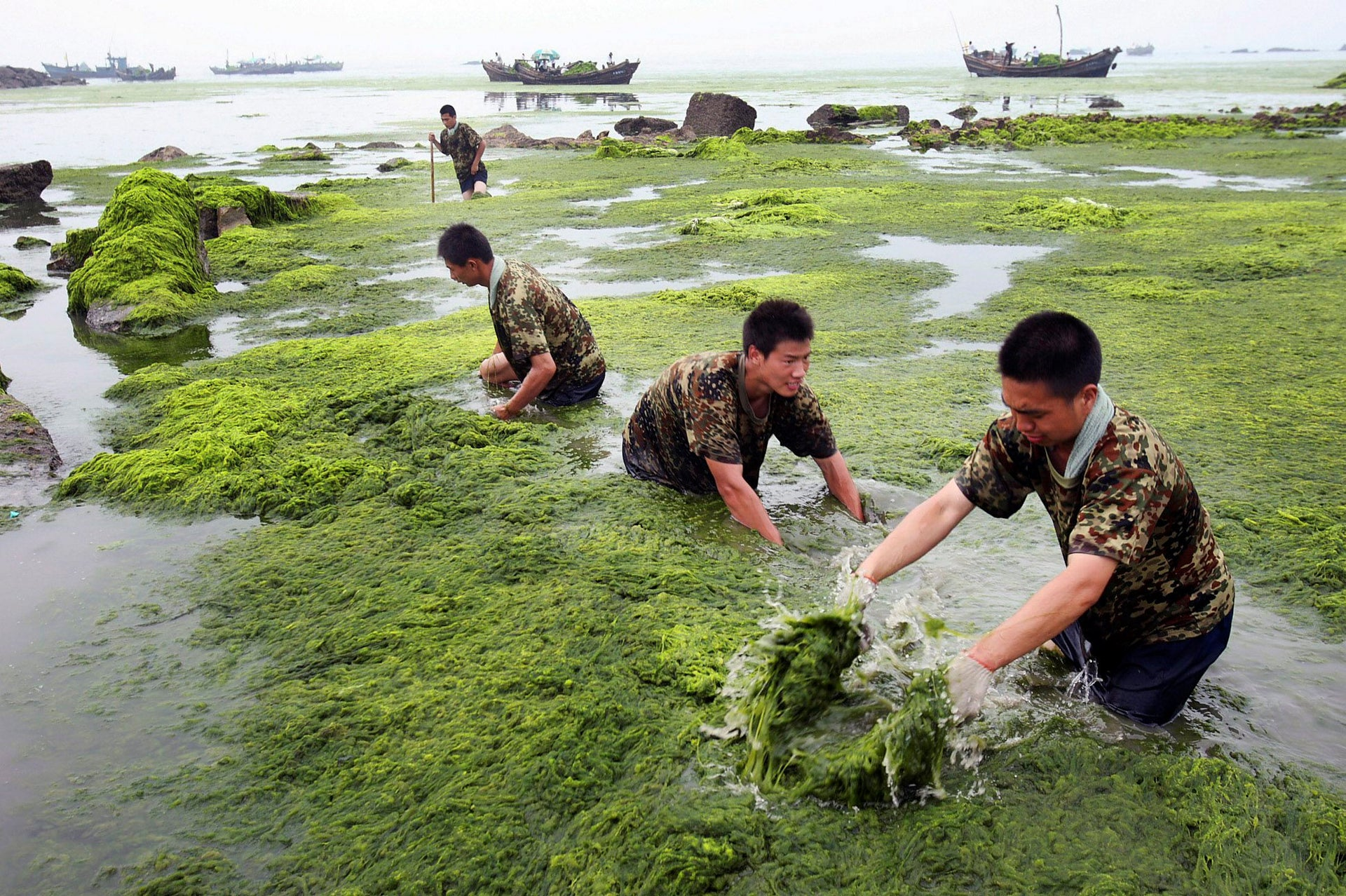 Chinese military personnel clear blue green algae from a beach in Qingdao