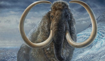 An illustration of an adult male woolly mammoth navigating a mountain pass in Arctic Alaska, 17,100 years ago.