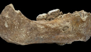 The remains of a Denisovan jaw.