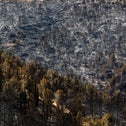 Scorched trees in the Judean Hills this week.