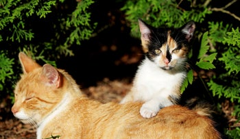 A cat and a kitten in the village of Krompach, Czech Republic, last year. And they have a lot to say.