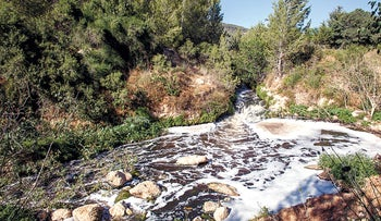 The Soreq stream. Effluent from the nearby desalination plant was released into the stream.