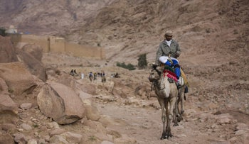 A Bedouin leads camels to a rest stop on a trail leading up to the peak of Mount Sinai.