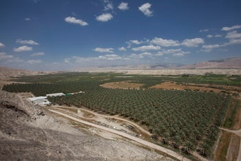A date farm in the Jordan Valley area that the IDF intends to return to the Palestinians.