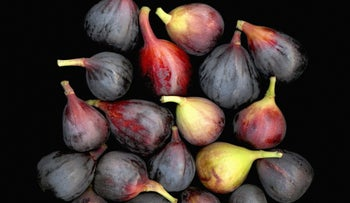 Figs. Sweet and delicious.