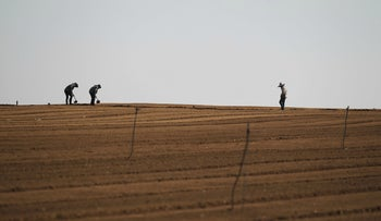 Thai workers working in a field on an Israeli farm