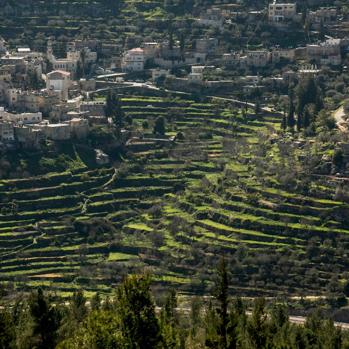 A aerial view of the world-famous, green terrace at Battir.