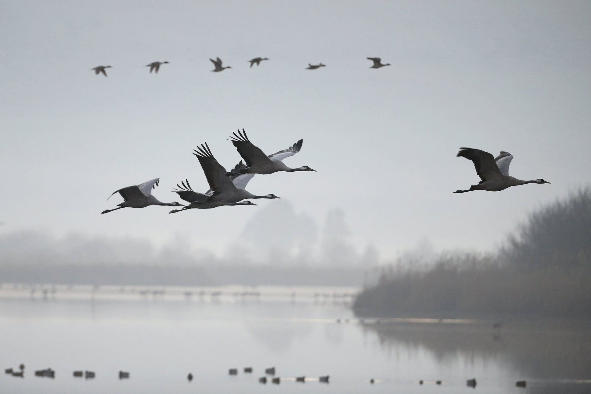 Migrating cranes fly over the Hula Lake Ornithology and Nature Park in northern Israel, February 14, 2016.