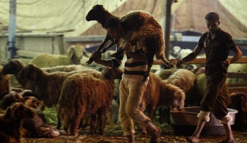 A livestock dealer carries a sheep to a customer in Cairo, Egypt ahead of Id al-Adha, Oct. 14, 2013.