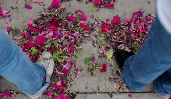 Yet another casualty of global warming: Petunia perfume, says doctoral student Alon Can'ani of Hebrew University.