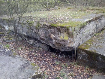 The moss-covered ruins of a German World War II bunker that may be hiding Russia's Amber Room.