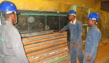 Guano being dried in Madagascan production plants.