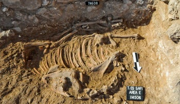 A donkey sacrificed in Canaanite ritual, found in situ at Tell es-Safi (Gath). The skeleton, dating back some 5,000 years, was found by the foundations of a house. Analysis of the teeth proved that the ass was not native, but had been born and bred in the Nile region of ancient Egypt.