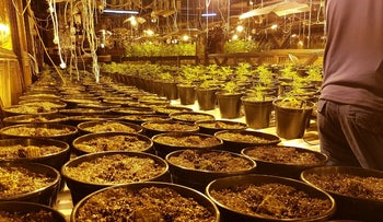 Israel Police find over 2,000 marijuana plants in defunct Tel Aviv night club. July 9, 2016.