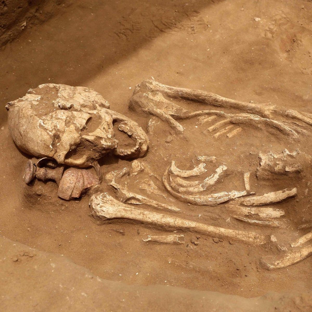 Pit burials in the first Philistine graveyard found in Israel, in ancient Ashkelon, June 28, 2016.