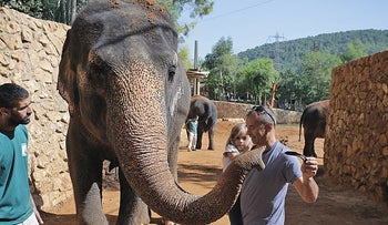 Visitors to the Biblical Zoo in Jerusalem meet a Thai elephant.