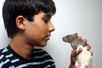Rats have a right to life too, even if you would rather they spend that life somewhere else. The picture shows Tomer Abramov, aged 15, rat breeder and aficionado, holding one of his pets in hand.