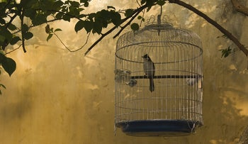 Though Caged and Bloodied, the Bird Sings: Picture shows a caged bird in the shade of a tree branch.