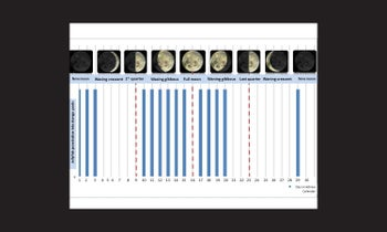 Correlation between nomadica jellyfish swarming and the lunar cycle (Hebrew calendar): findings by Avi Algazi.