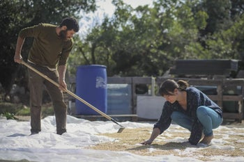 Amit Pompan and Adi Segal dry sprouted wheat. He is raking the wheat that is scattered on the ground. She is crouching on the ground, spreading the wheat with her hands.