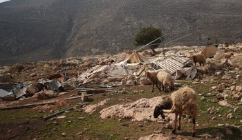 Sheep grazing in Khirbet Tana, where the IDf demolished 49 structures on January 3, 2017.