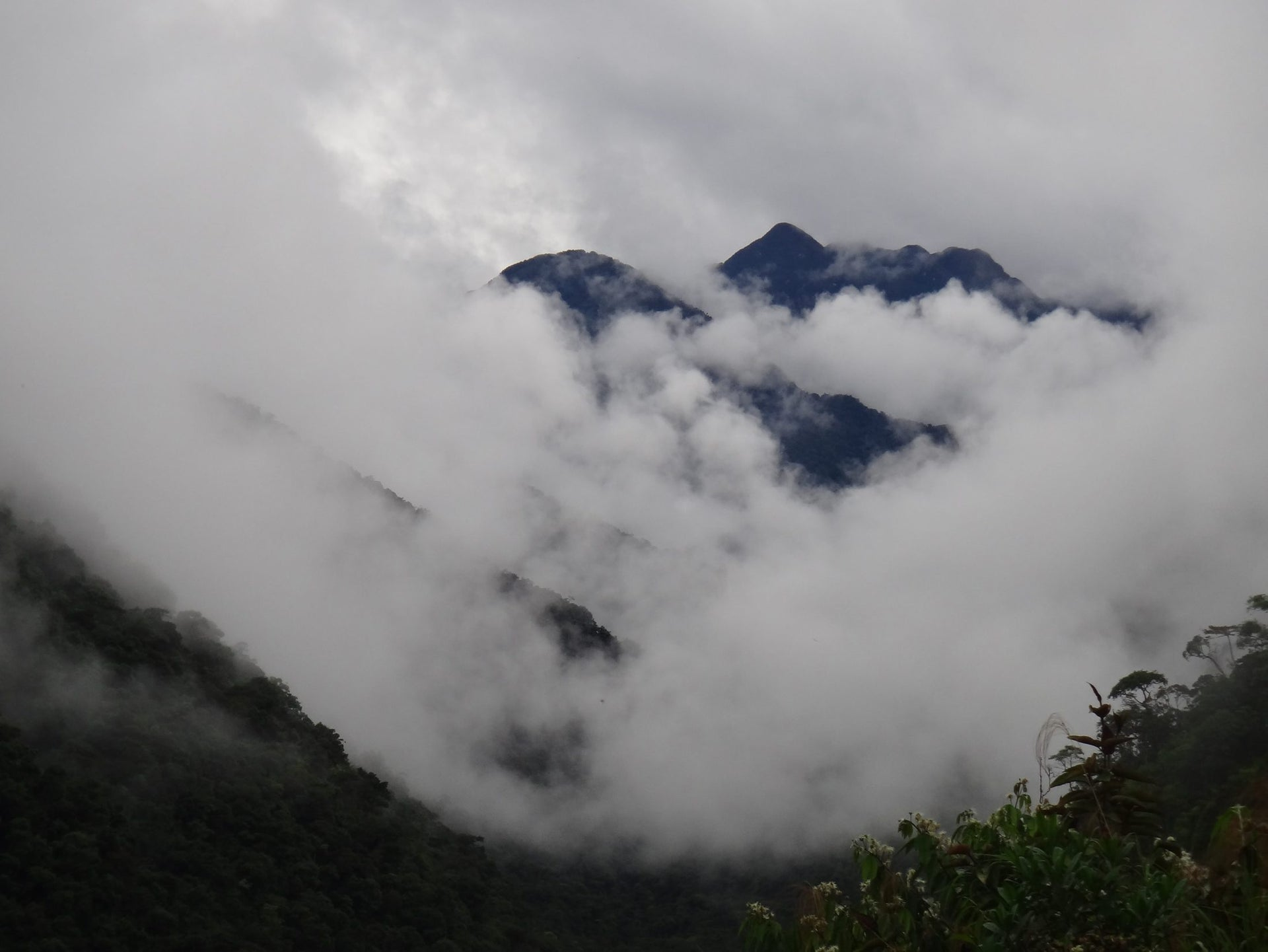 The Andean mountain cloud forest, habitat of the 100-foot incadendron tree.