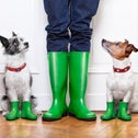 Dogs in rain boots look at up their owner.