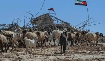 Livestock in a demolished Palestinian village in the southern Hebron Hills.