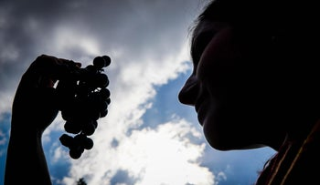 A woman holding grapes in a vineyard during harvest season, October 2017.
