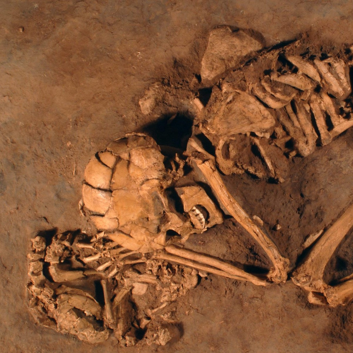Cast of the Natufian woman buried with her hand resting on a pet puppy, Eynan, Israel