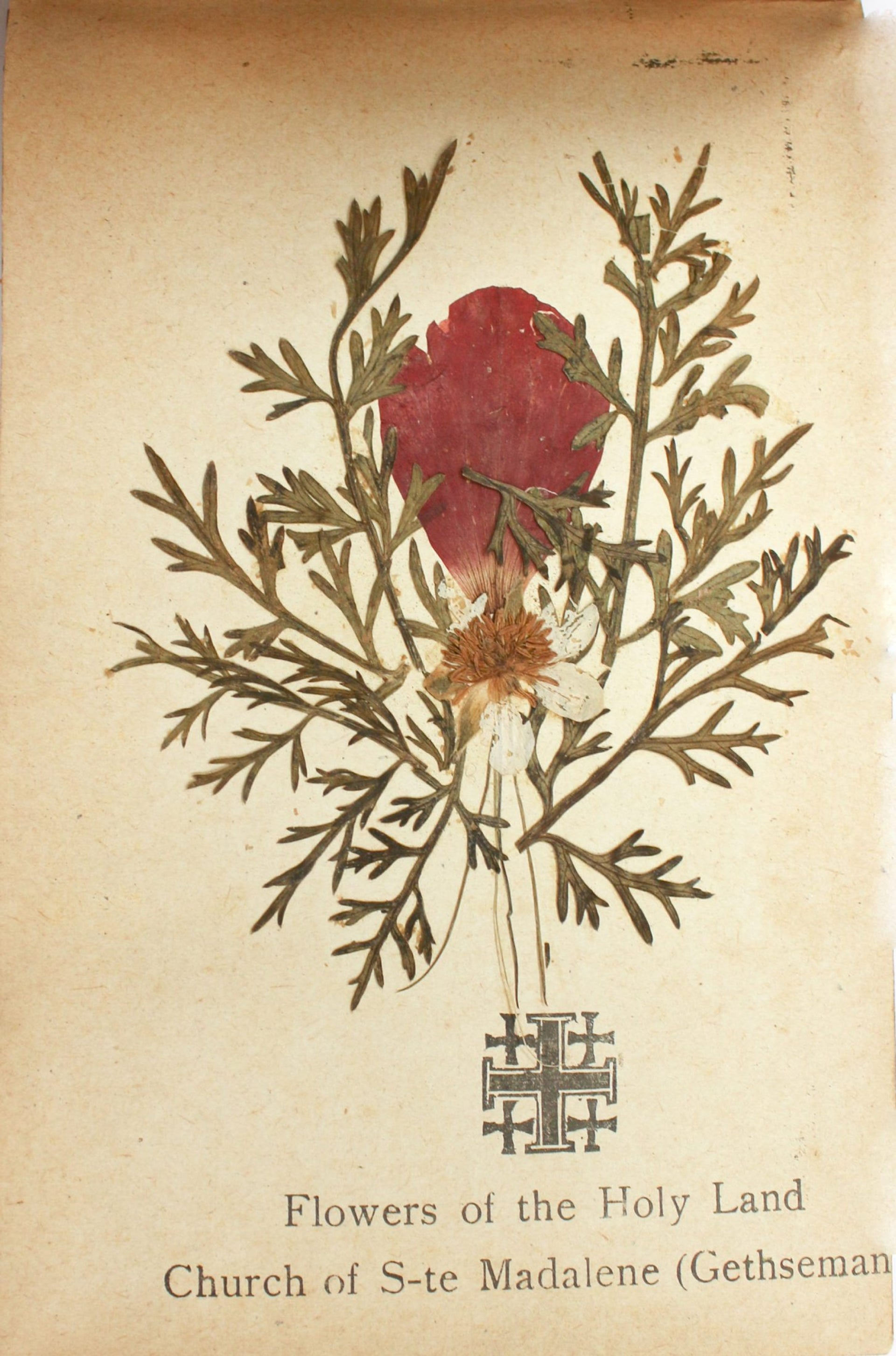 An album with dried flowers sold as a souvenir to the British soldiers.