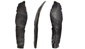 One of five flint sickle-blade from Ohalo II, showing glossing that fades from the edge, due to use in harvesting grains. Four of the five blades were found on the floors of the brush huts. The blades date to about 23,000 years ago, showing that way back then, the locals were already cultivating grain.