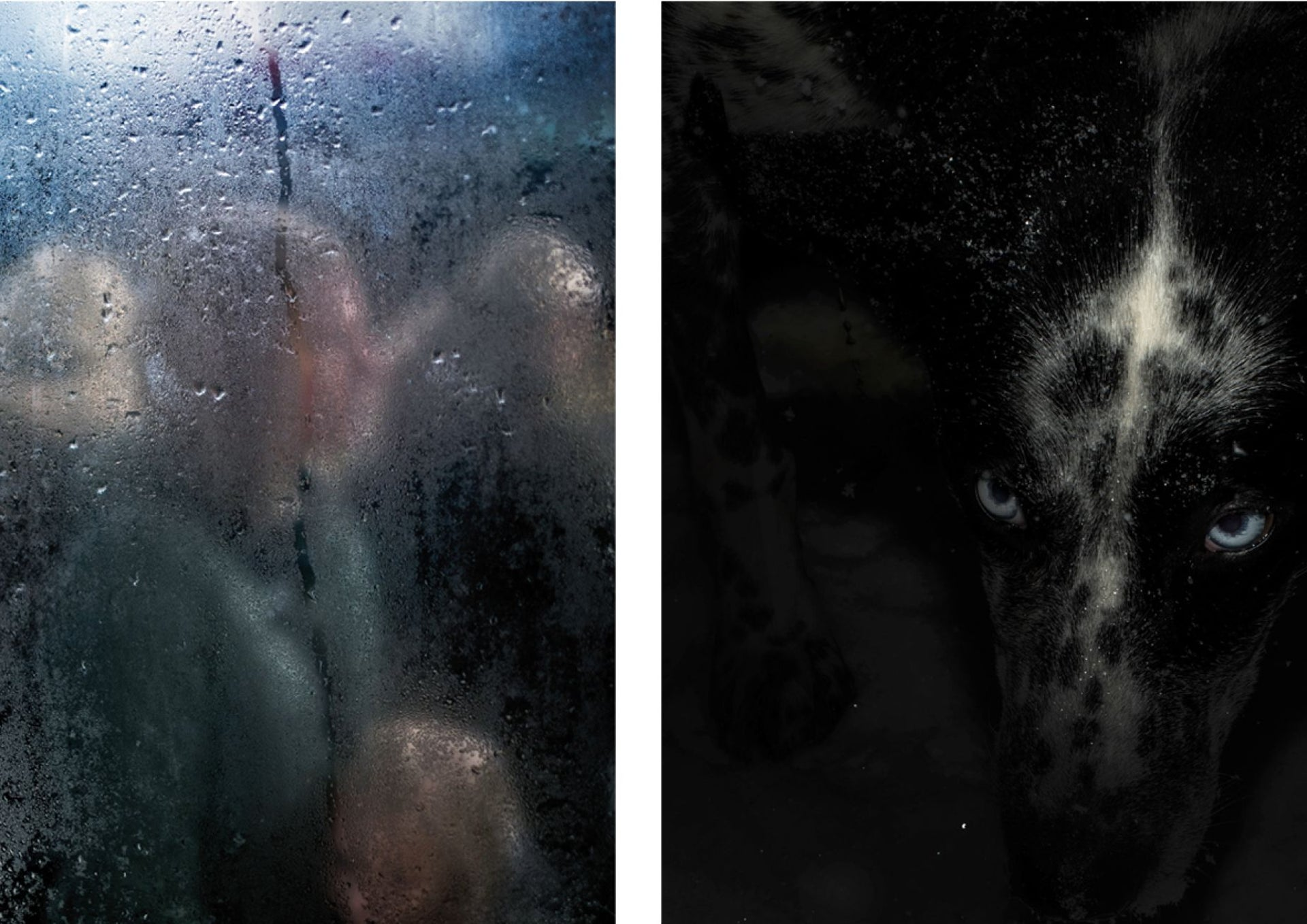 On the left a woman is seen through steam covered window and on the right a close up photo of a dog's bright blue eye.