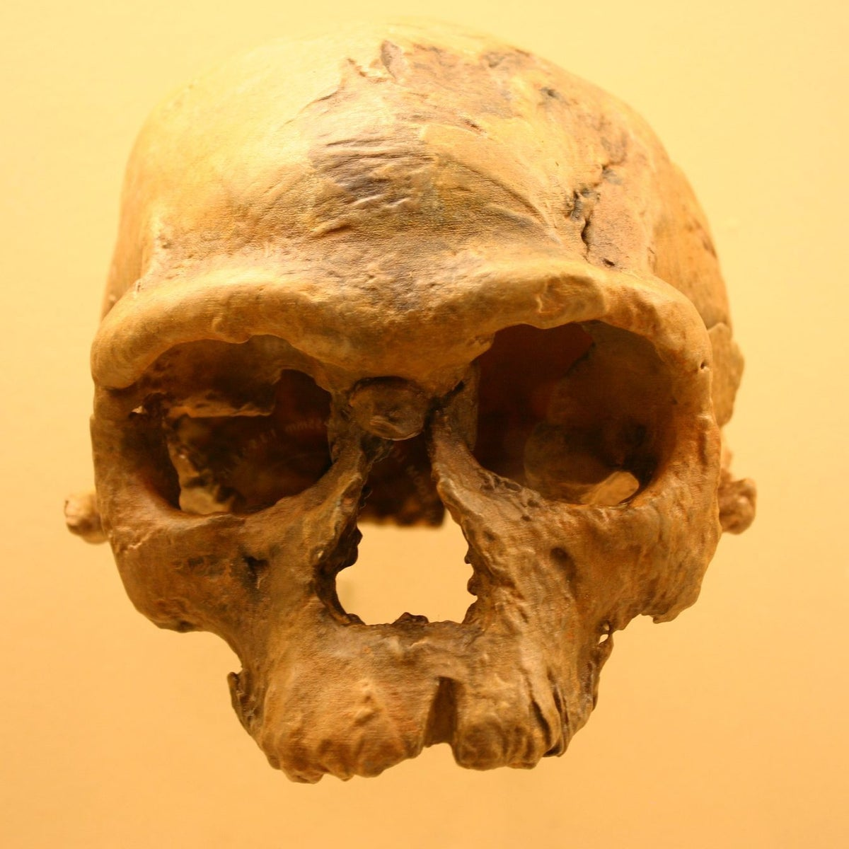 Jebel Irhoud Man: This primitive skull found in Jebel Irhoud, Morocco had originally been thought to be Neanderthal. Recent analysis indicates it's a Homo sapiens skull dating to around 300,000 years ago.