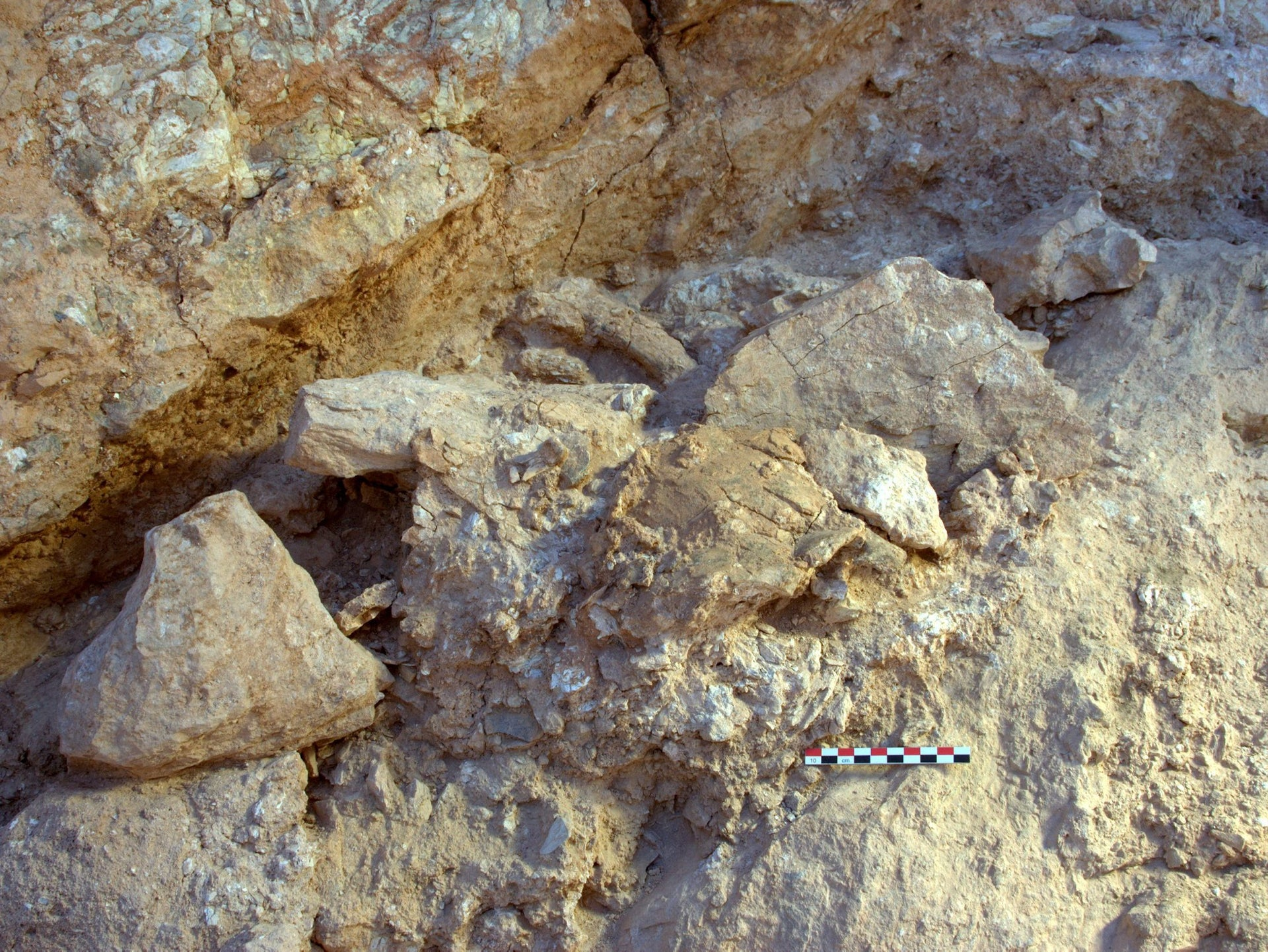 Two of the new Jebel Irhoud (Morocco) fossils in situ as they were discovered during excavation. In the center of the image, in a slightly more yellow brown tone, is the crushed top of a human skull (Irhoud 10) and visible just above this is a partial femur (Irhoud 13) resting against the back wall.