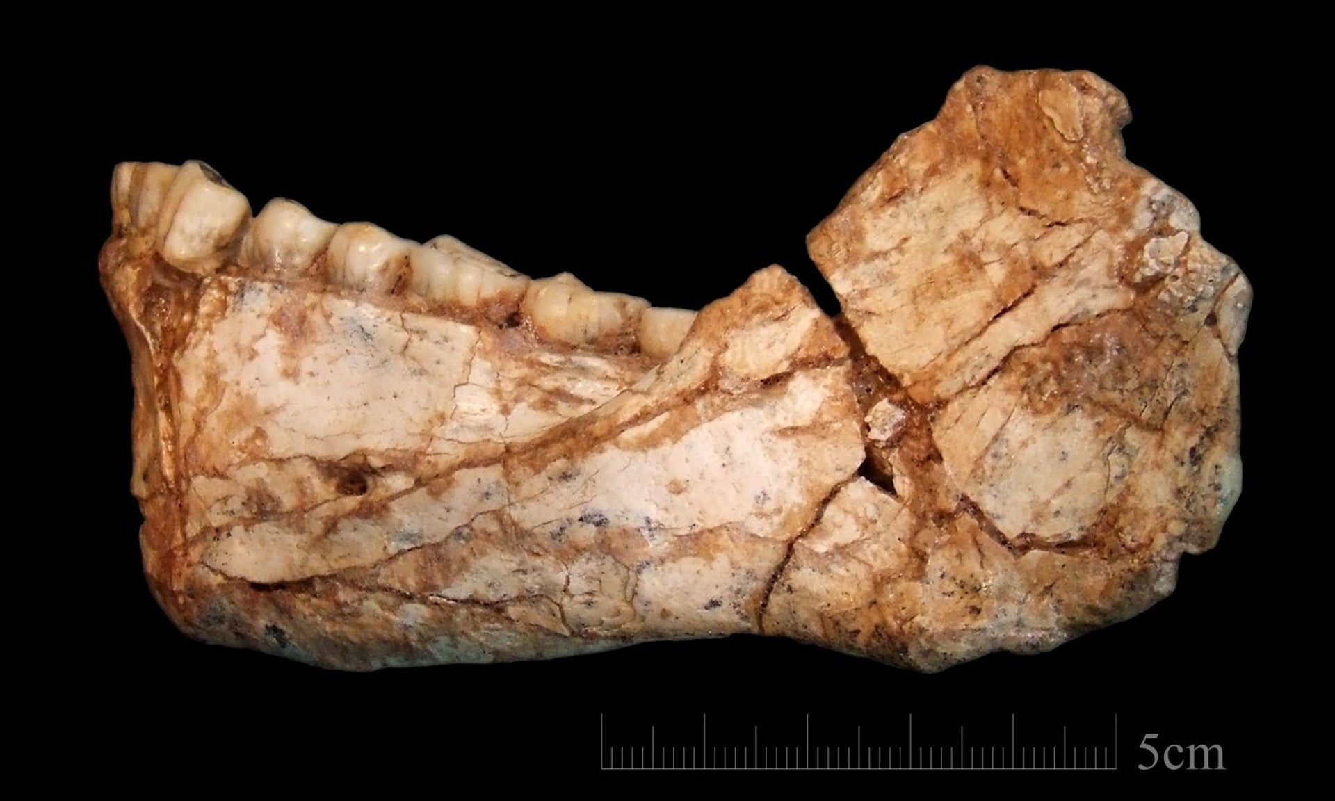 Mandible from Jebel Irhoud, Morocco: The bone morphology and the dentition display a mosaic of archaic and evolved features, clearly assigning it to the root of our own lineage, say archaeologists.