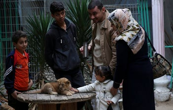 A Palestinian family looks at a two-month-old lion cub, at the zoo in Rafah, Gaza Strip, December 22, 2017.