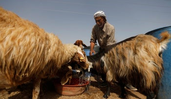 Palestinian man Mahmoud Qabana offers water to sheep outside his tent in Jordan Valley in the West Bank November 14, 2017.