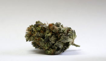 File photo of a marijuana bud. The plant is known to have many therapeutic actions that have yet to be fully explored.