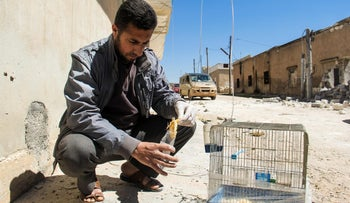 A Syrian man collects and bags the body of a dead bird, reportedly killed by a suspected toxic gas attack in Khan Sheikhun, in Syria's northwestern Idlib province, on April 5, 2017.