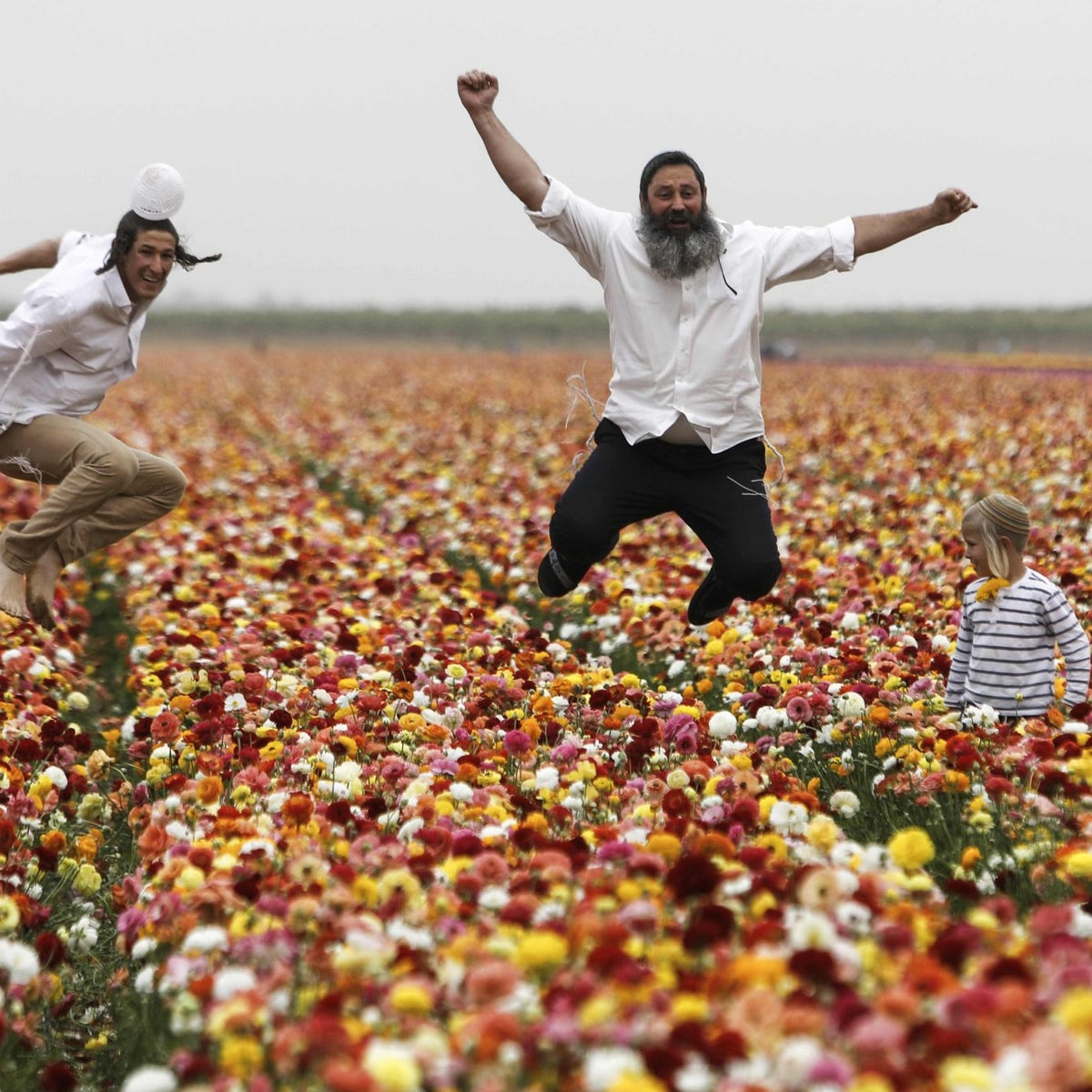 Israelis enjoy the Ranunculus flowers in a field in the southern Israeli Kibbutz of Nir Yitzhak, located along the Israeli-Gaza Strip border, during the Jewish holiday of Pesach (Passover) on April 12, 2017.