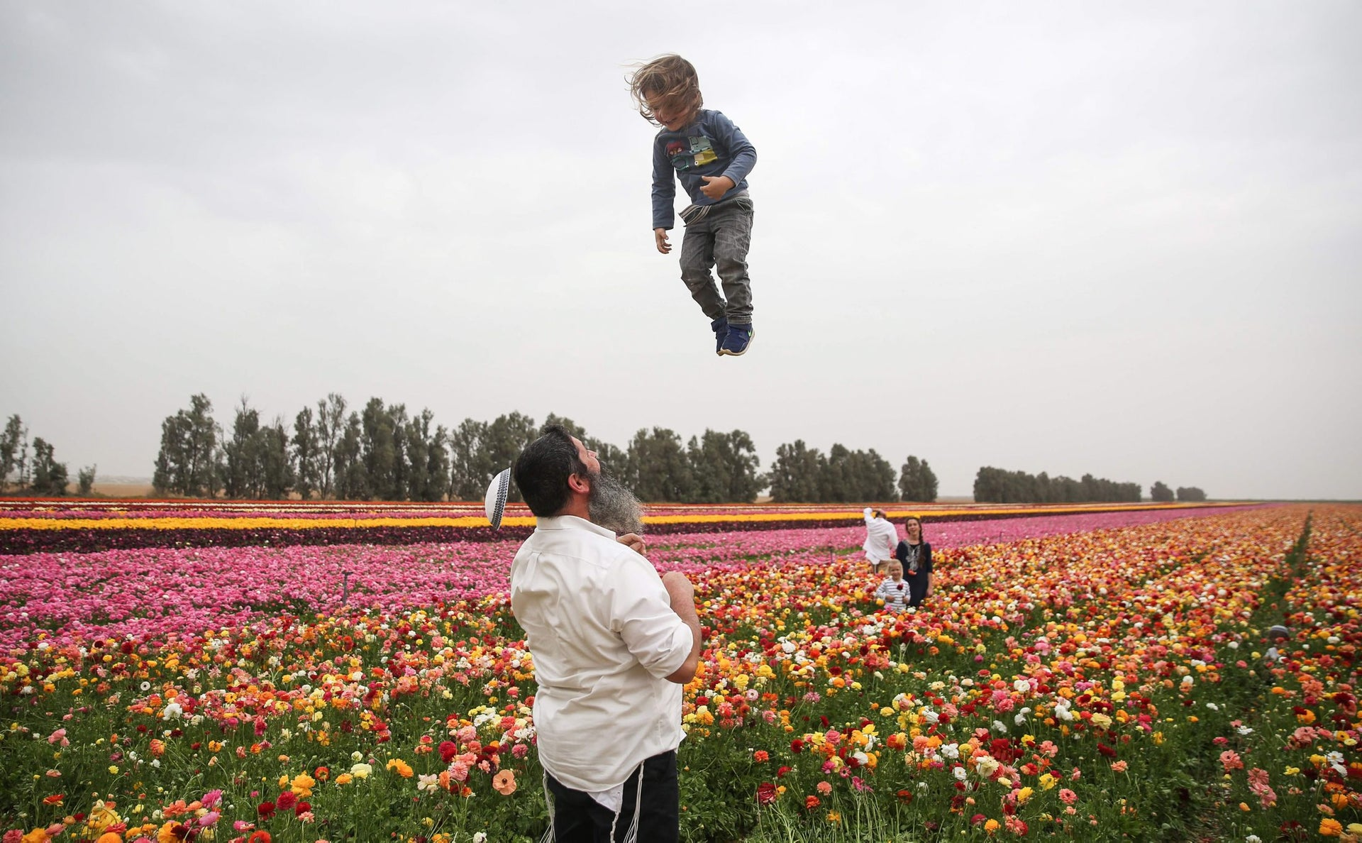 An Israeli man playfully throws a child as his kippah falls off, while enjoying the Ranunculus flowers in a field in the southern Israeli Kibbutz of Nir Yitzhak, located along the Israeli-Gaza Strip border, during the Jewish holiday of Pesach (Passover) on April 12, 2017.