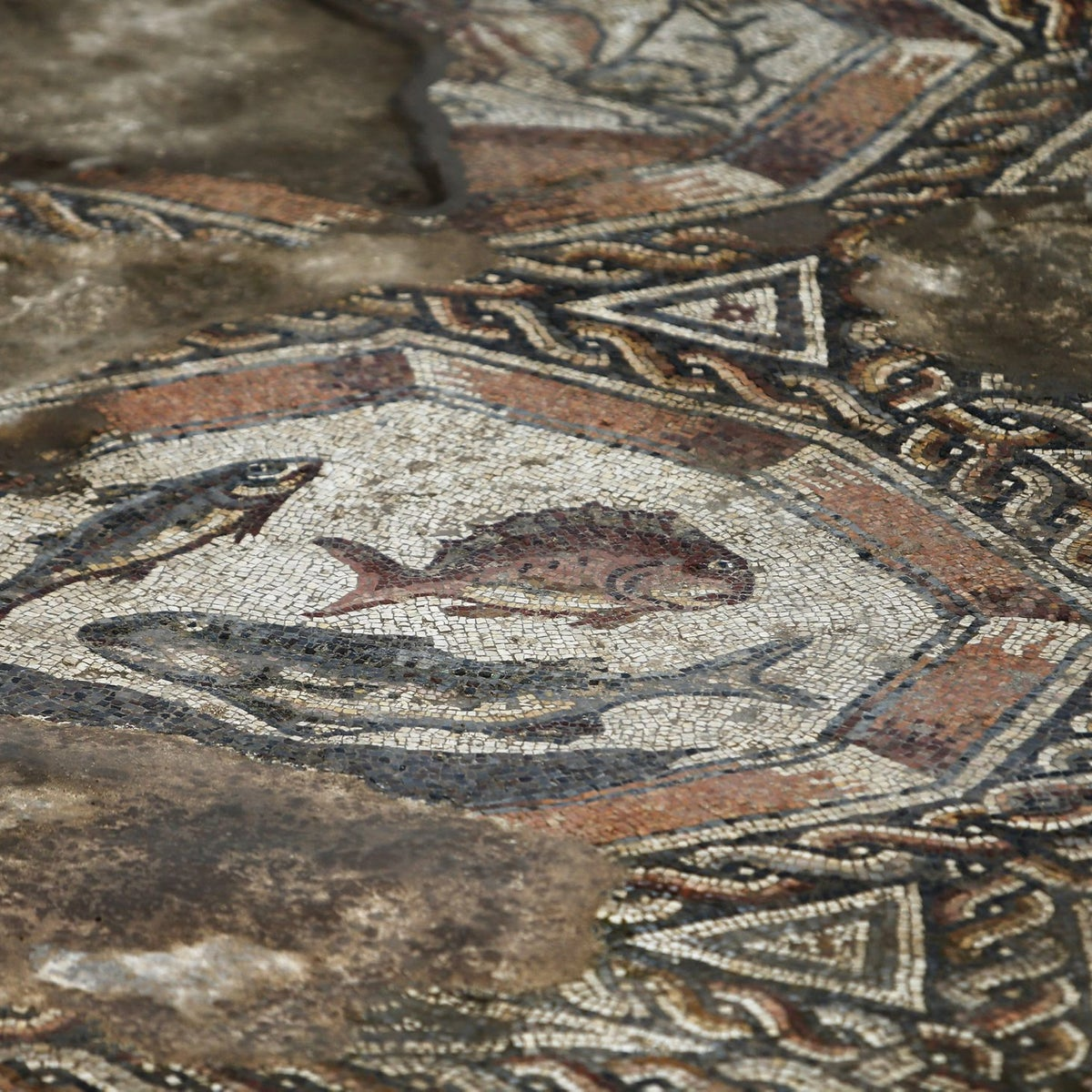 A detail of a mosaic which was part of a courtyard of a villa dated some 1,700 years ago, in Lod, south to Tel Aviv November 16, 2015.