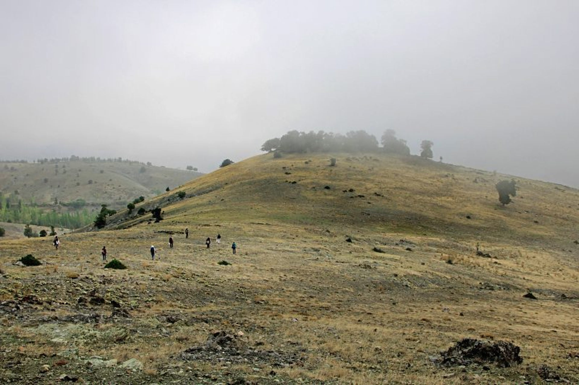 Survey on Asar Tepe: At least part of this belonged to the Calpurnii estate. Here the remains of pottery production were found. The photo shows greenish hilly scenery and some fog partly obscuring the sparse trees on the hill.
