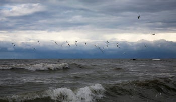 Seagulls fly during a rainstorm over the Mediterranean Sea near the coast of Shati refugee camp in Gaza City, January 26, 2016.