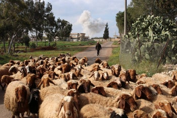 Smoke rises behind a man herding sheep after an airstrike on rebel-held Daraa in southern Syria, April 7, 2017.