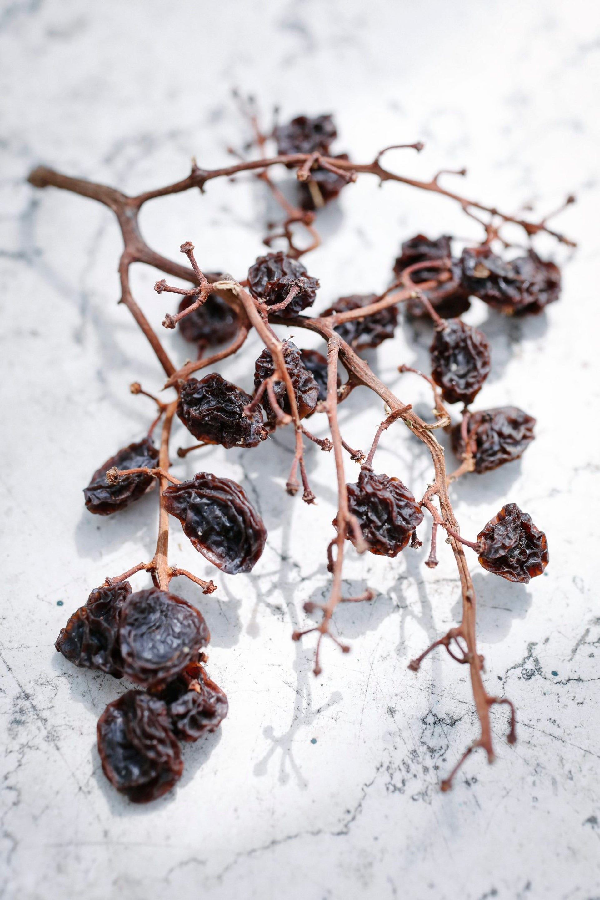 Raisins ready to be separated from their stems.